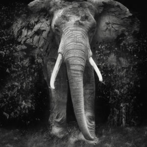 The Disappearance of the Elephants - Erik Brede Photography